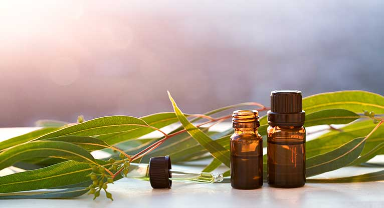 Eucalyptus_essential_Oil